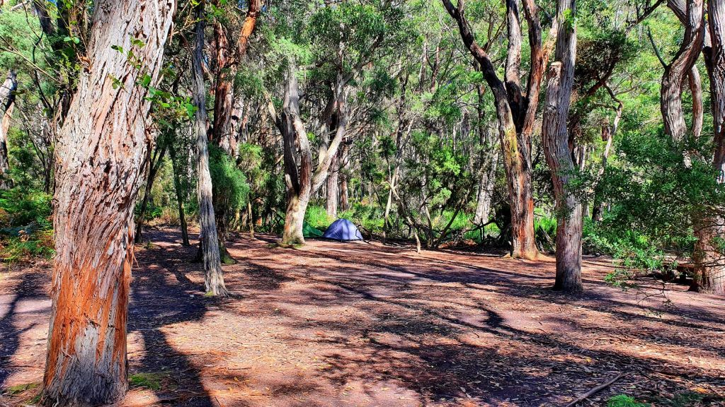 Little Waterloo Bay campsite is what you need to know about Wilsons Promontory