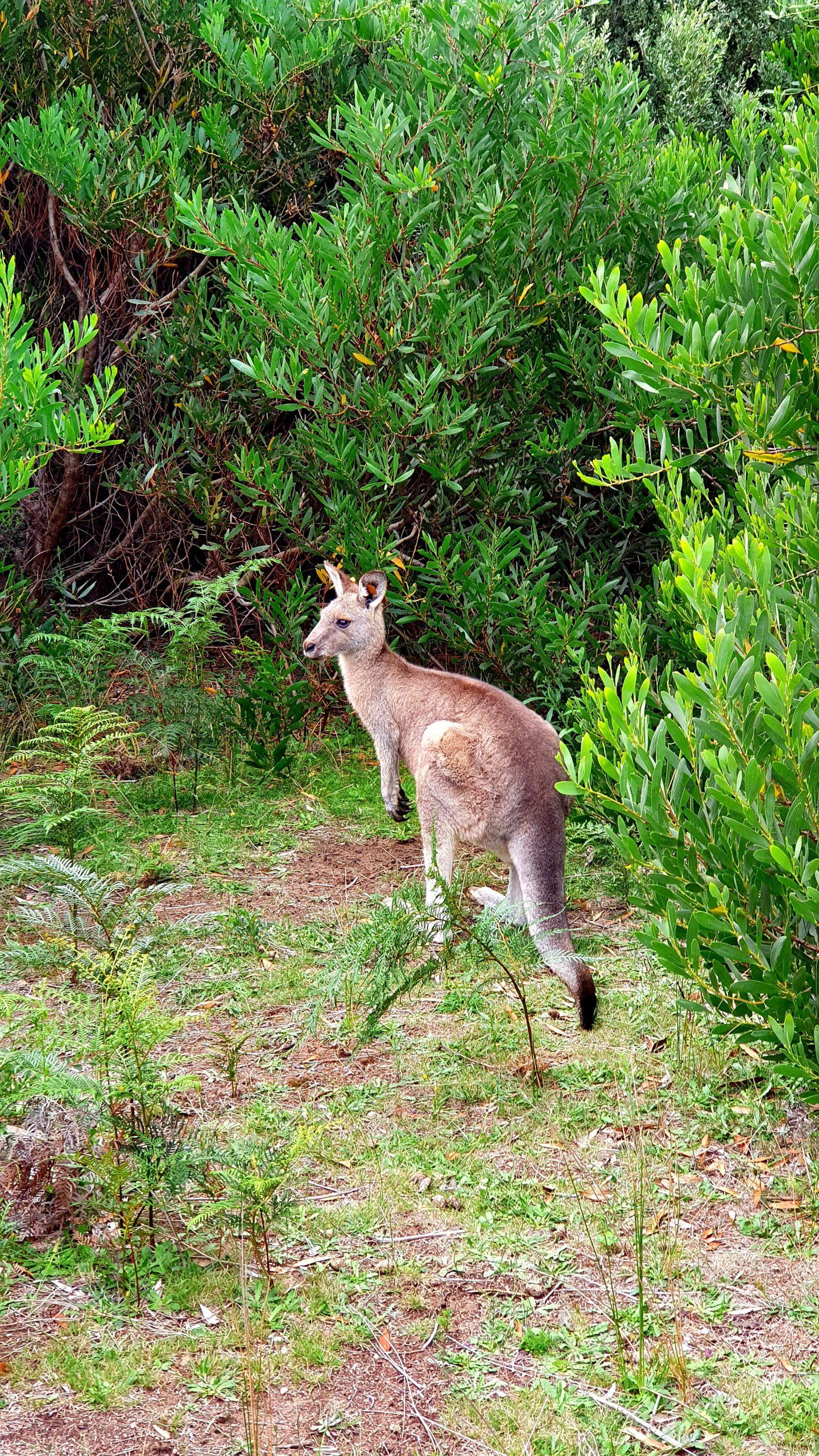 Kangaroo Prom Wildlife Walk
