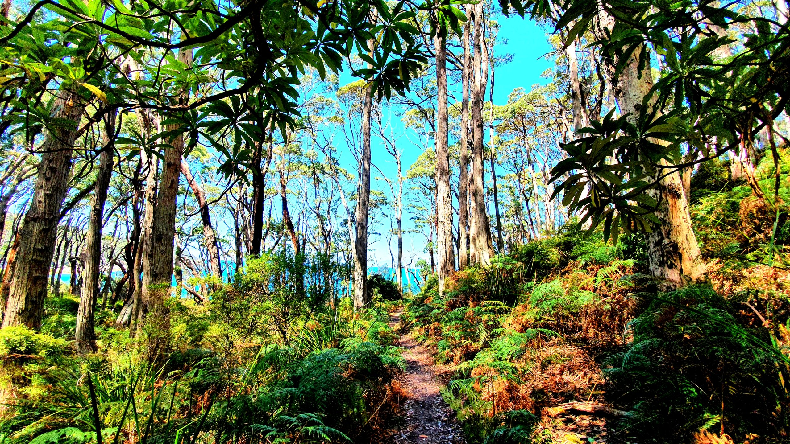 Southern Circuit hike is what you need to do in Wilsons Promontory