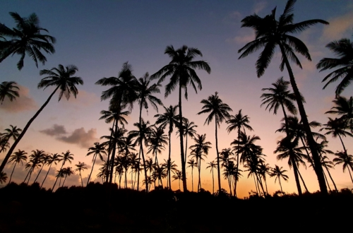 Sri Lanka Palm Beach