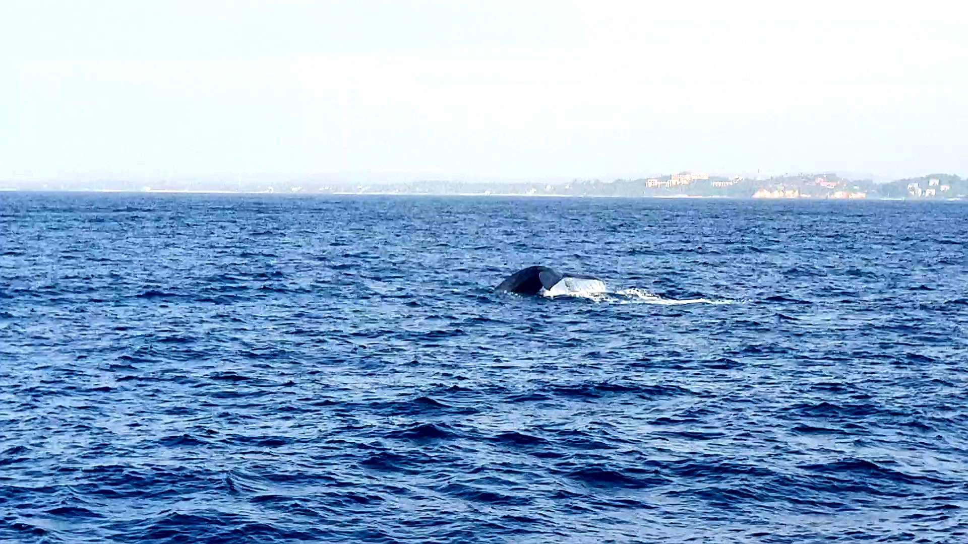 Whales Watching Sri Lanka