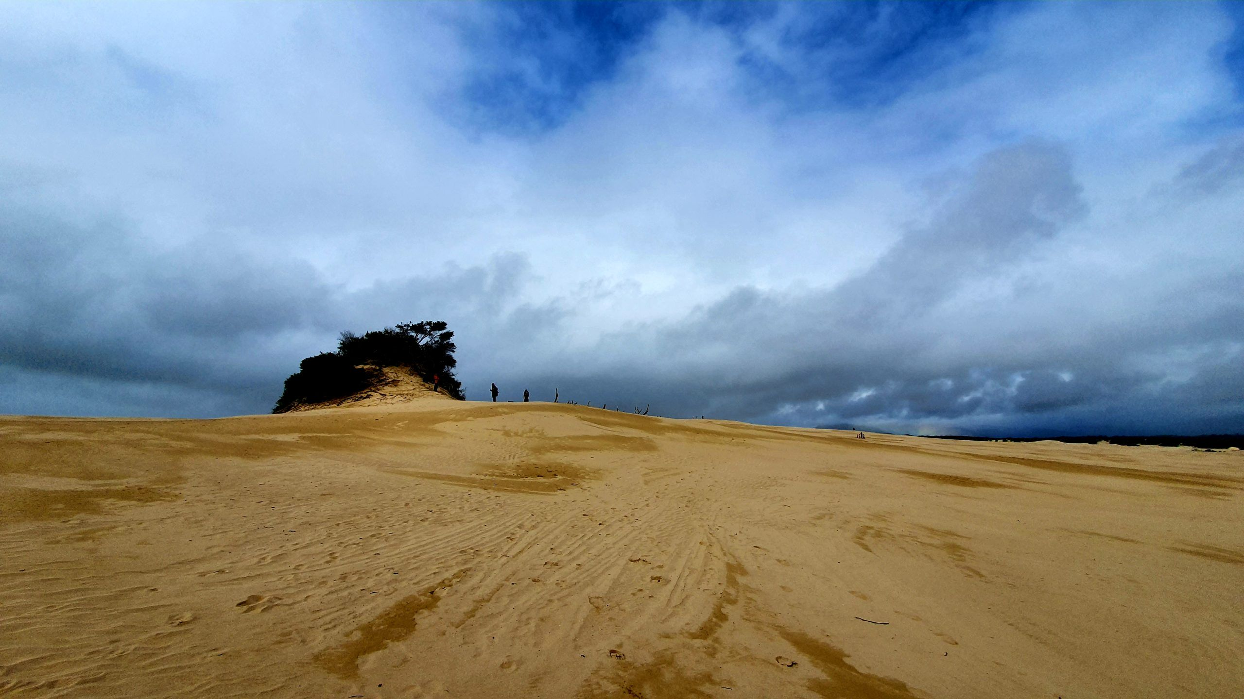Big Drift is what you need to do in Wilsons Promontory