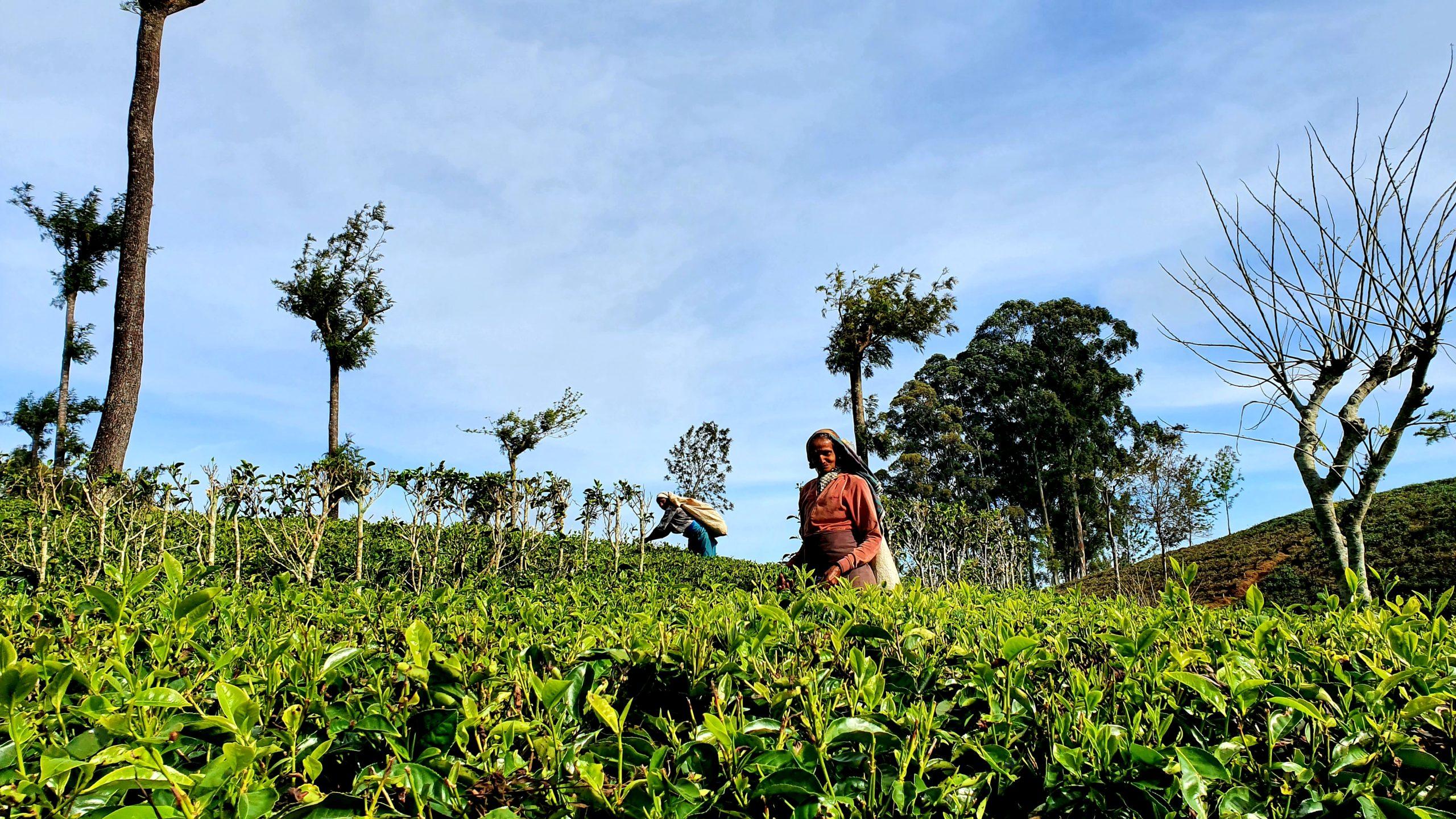 Lipton's Seat Sri Lanka worth doing