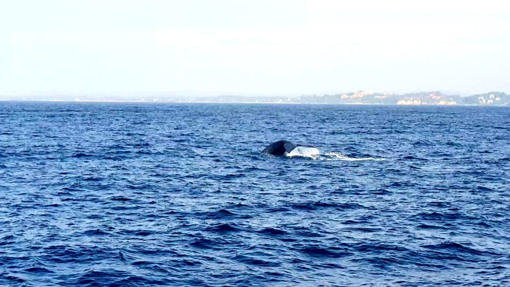 Whales Watching Sri Lanka