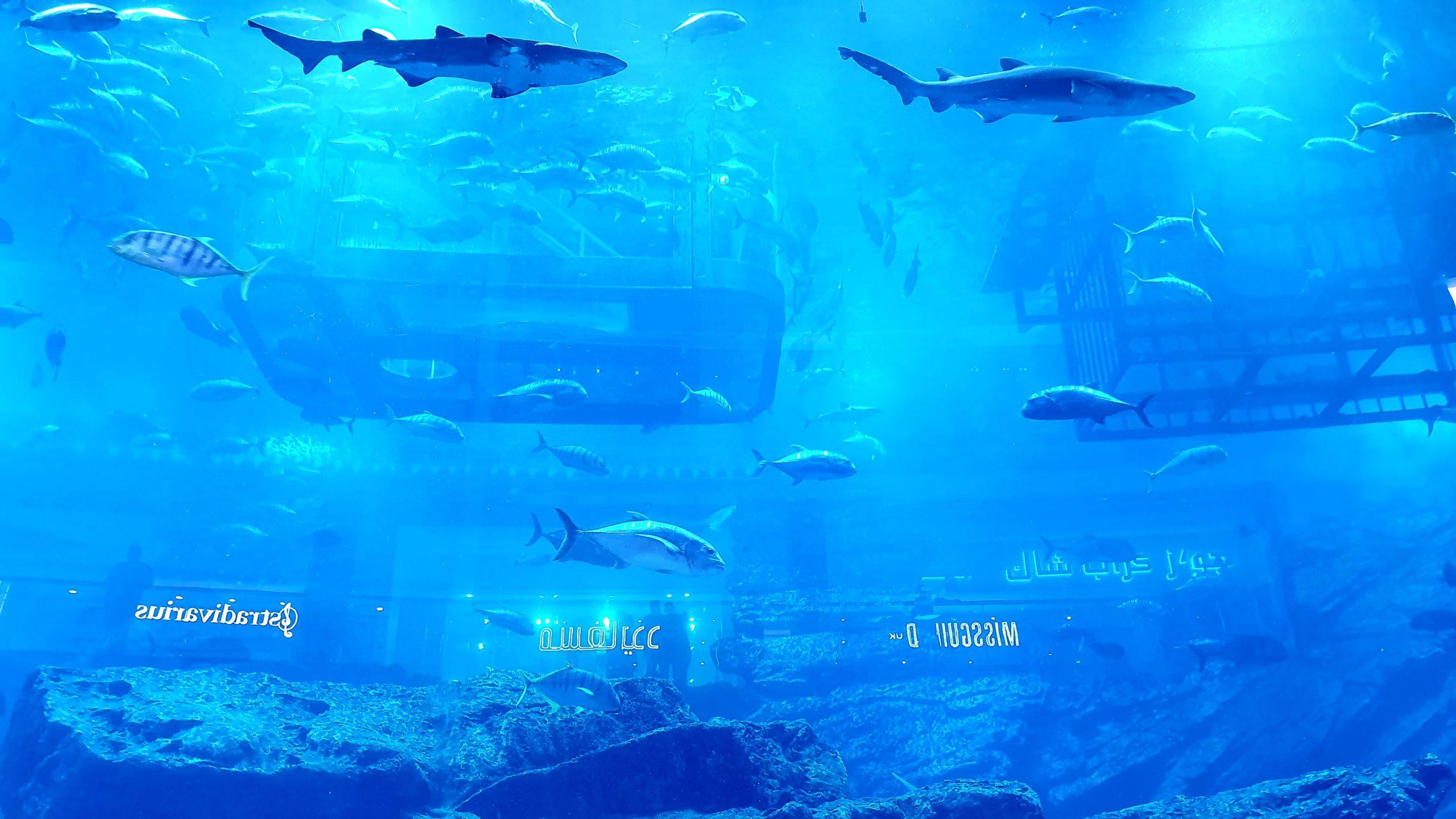 Dubai Aquarium two days in Duabi