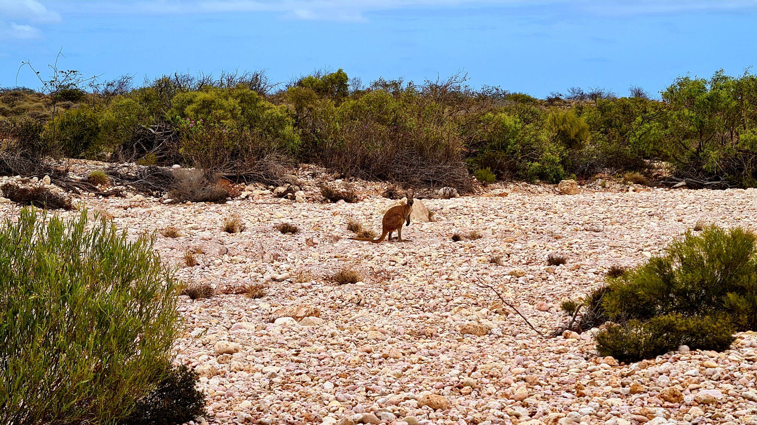 Park Narodowy Cape Range Manu Mandu Walk