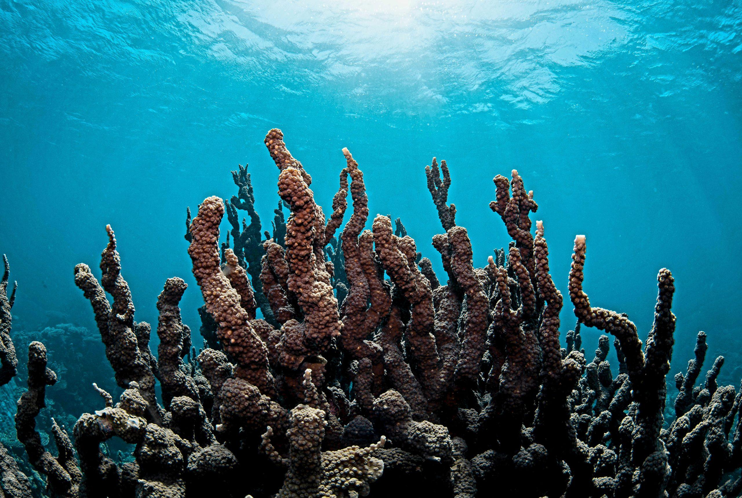 Snorkelling on Ningaloo Reef