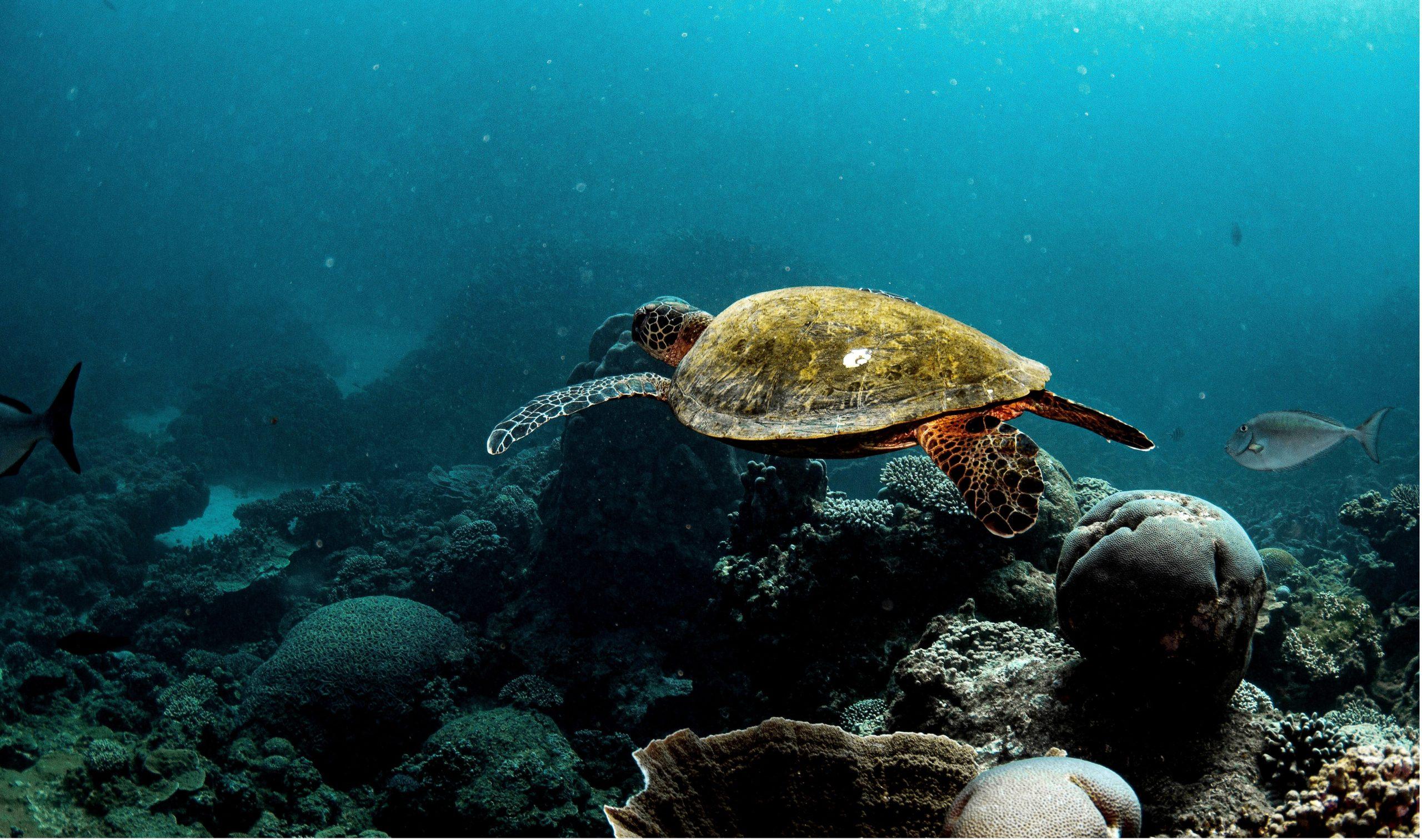 Rafa koralowa Ningaloo
