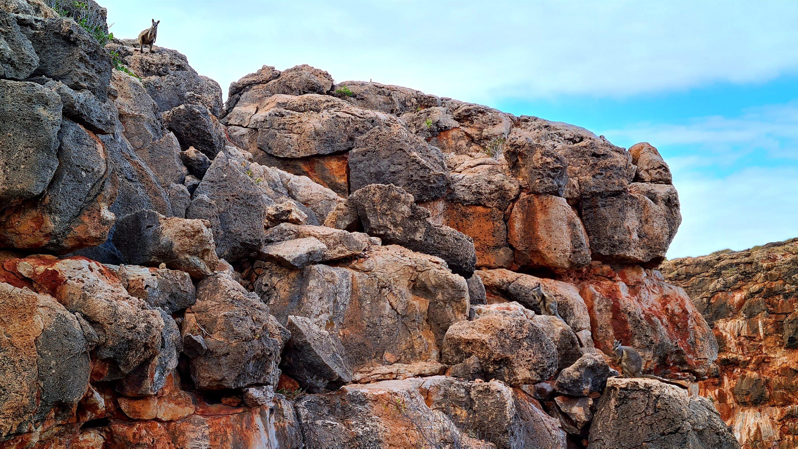 Park Narodowy Cape Range Yardie Gorge Trail