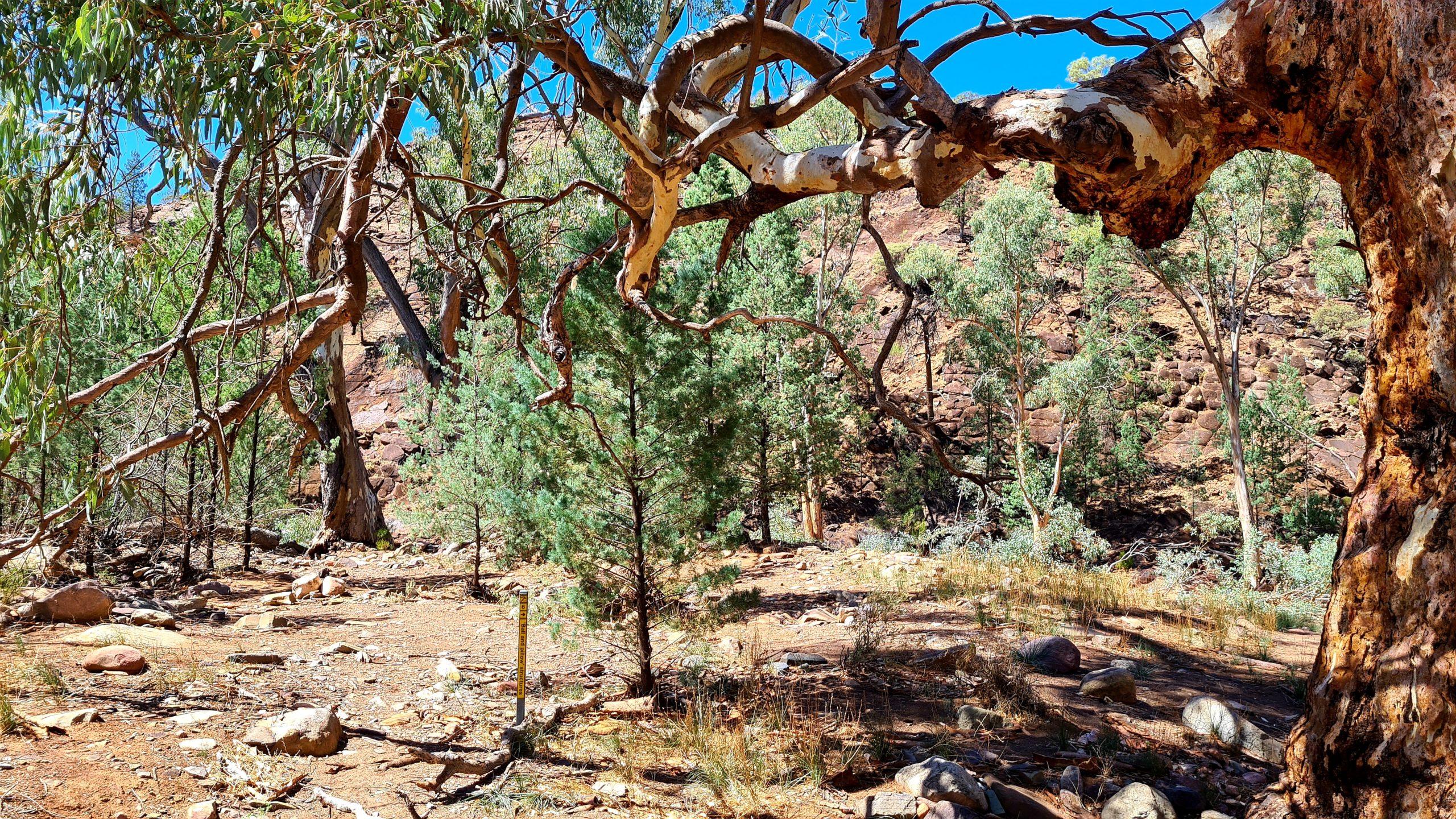 Walking trails in the Flinders Ranges Bunyeroo Gorge