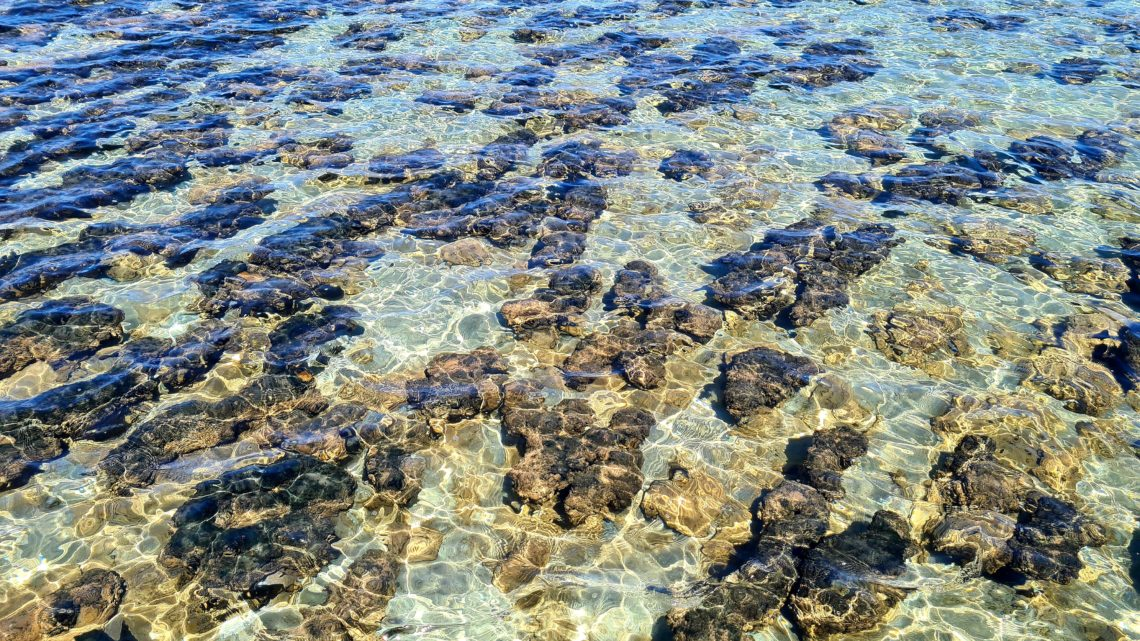 Zatoka Rekina