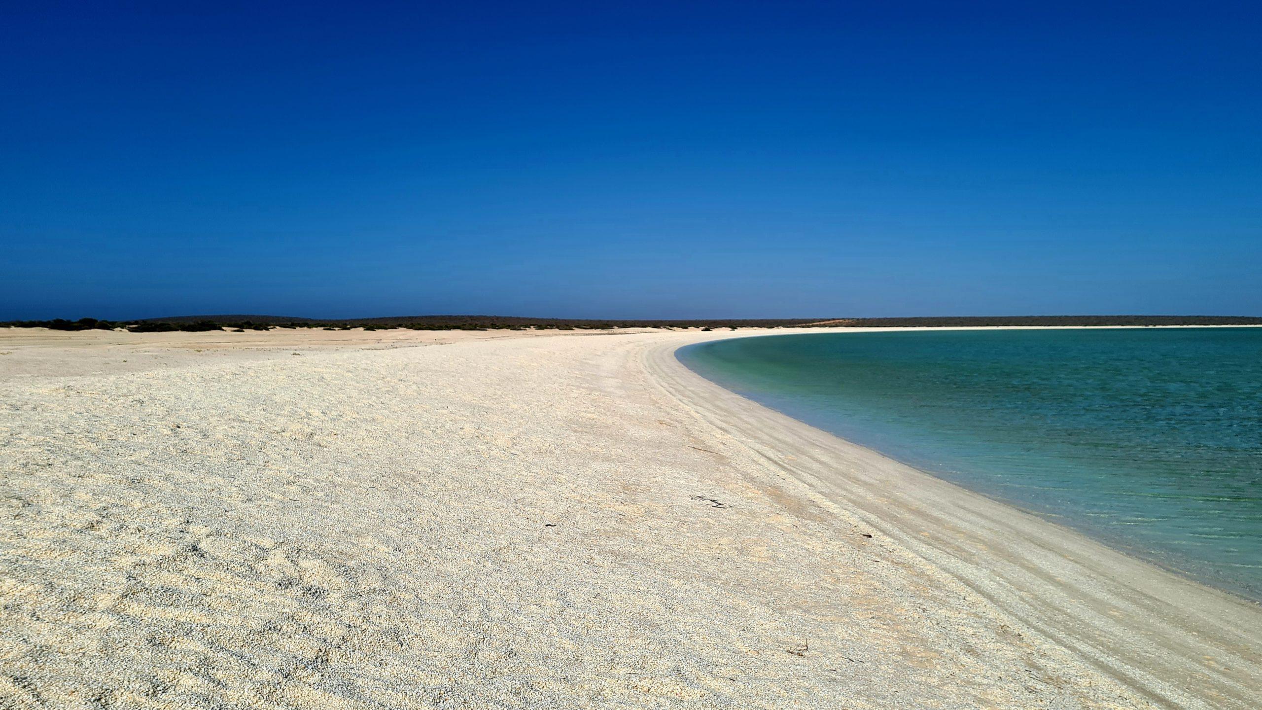 Zatoka Rekina w Zachodniej Australii  Shell Beach