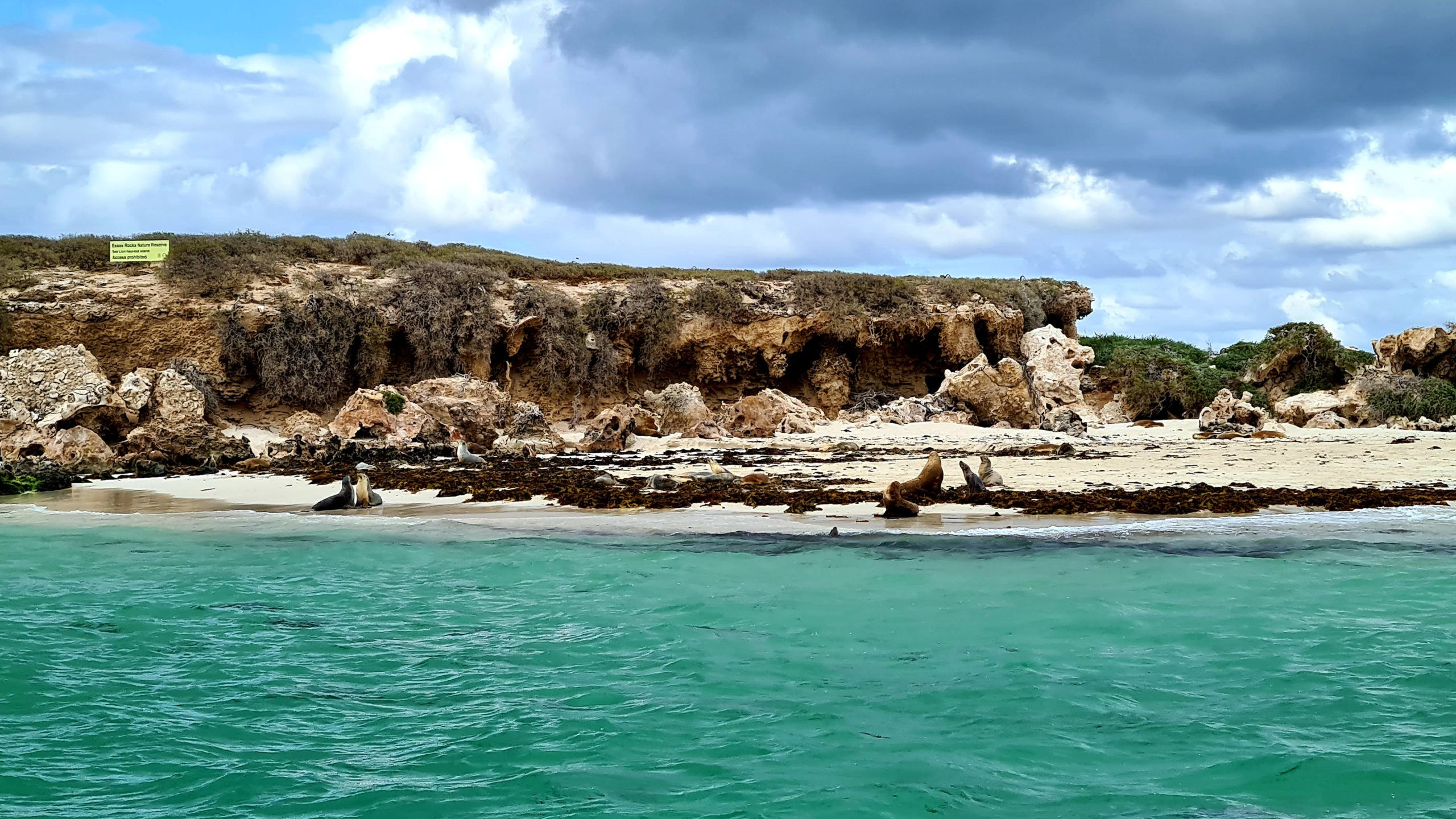 Top things to do in Jurien Bay swimming with sea lions